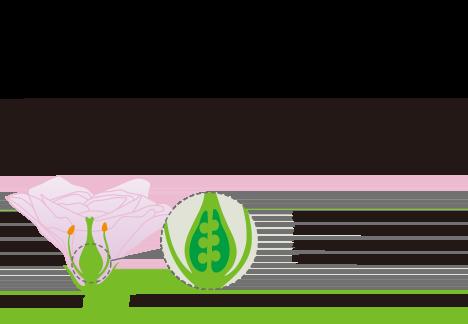 ブルガリア ダマスクローズの胎座から抽出、培養された植物由来のプラセンタです。若々しさのための抗酸化力にすぐれ、コラーゲン生成